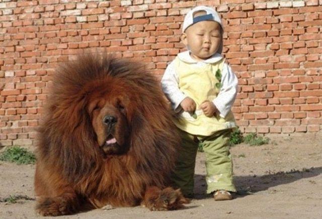 Fotos Perros divertidas y graciosas